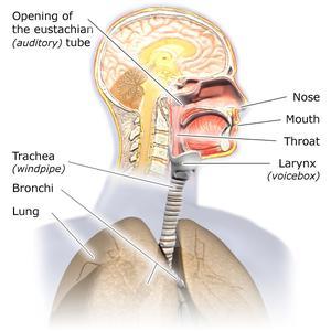 Respiratory_EN